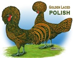Golden Polish Fowl
