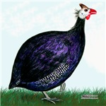 Royal Purple Guinea