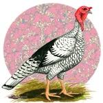 Royal Palm Turkey 2
