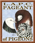 Pigeon Pageant1