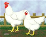 White Rock Rooster and Hen