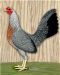 Grey Game Hen