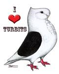 Turbit Pigeon Heart
