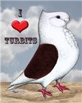 Red Turbit Pigeon