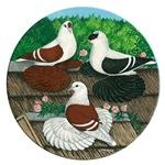 Saxon Pigeon Trio