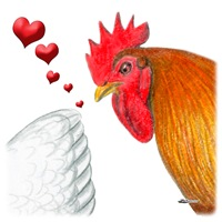 Valentine Rooster in Love