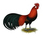 Phoenix BB Red Rooster