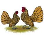Sebright Golden Bantams