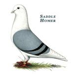 Blue Saddle Homer