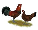 Old English Pheasant Fowl