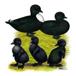 Black Call Duck Family