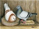 Nesting Racing Pigeons