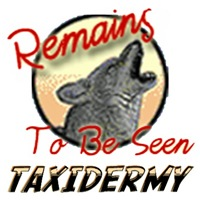 Remains to be seen Taxidermy