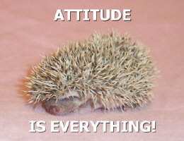 Attitude is Everything Hedgehog