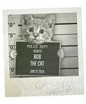 Cat mugshot