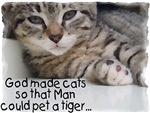 God made cats...