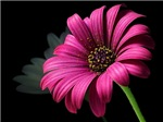 Pulchritudinous Purple Flower