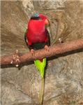 Pretty Bird Pretty Bird