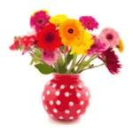 Cute Floral Red White Polka Dot