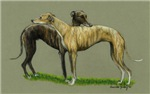 Greyhound Hug