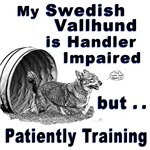 Swedish Vallhund Agility
