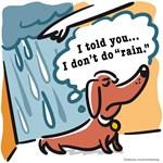 Doxies Hate Rain