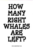 RIGHT WHALES...LEFT?