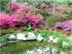Original Flower & Nature Scenic Photos & Gifts