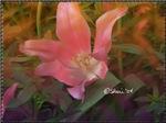 0434 Tulip 1