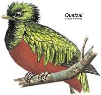 Quetzal Rain Forest Bird