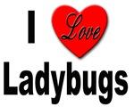 I Love Ladybugs