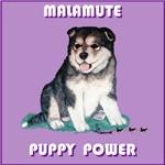Malamute Puppy Power