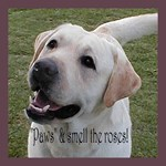 Labrador Retriever Advice