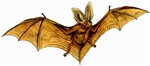 Long-eared Bat T-Shirts