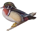Wood Duck T-Shirts