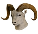 Bighorn Sheep T-Shirts