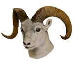Bighorn Sheep T-Shirts