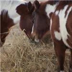 Pony Love 2