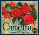 Camellia Fruit Crate Label