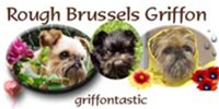 Rough Brussels Griffon Gifts