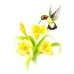 ruby Neck Hummingbird