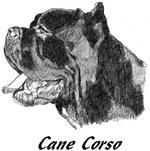 Cane Corso - 8 images *5 NEW PHOTOS*