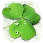 Green Shamrock with Dew
