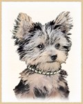 Yorkshire Terrier-Multiple Illustrations