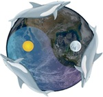 Yin Yang Dolphin Big Blue Marble
