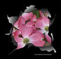 PINK DOGWOOD T-SHIRTS AND GIFTS
