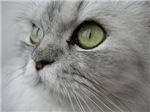 Meowy  Cat Forsley Designs