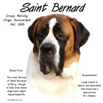 Saint Bernard (Smooth)