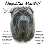 Neapolitan Mastiff (gray/blue)