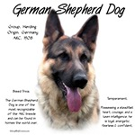 German Shepherd Dog(sable)